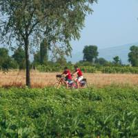 Self guided cyclists enjoy the myriad of crops in the valley floor of Umbria   Sue Badyari