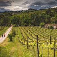 Walkers take in the typical Tuscan landscape on the Via Francigena | Tim Charody