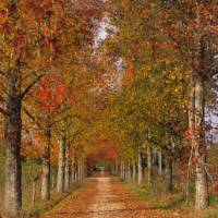 Walk through beautiful landscapes on the Portuguese Way between Coimbra and Porto | Antonio Sacchetti