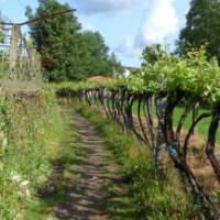 The Portuguese Camino offers a quieter alternative to the Camino in Spain   Pat Rochon