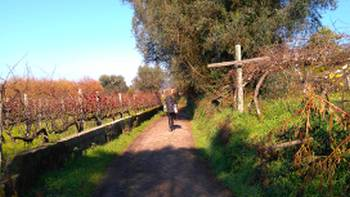 Exploring vineyards on the Camino Portuguese self guided walking tour that departs year-round