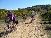 Cycling through vineyards in Portugal