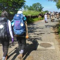 Pilgrims hiking through rural villages along the Camino Frances in Spain   Gesine Cheung