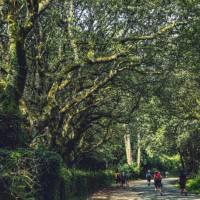 Walking along the Camino de Santiago trail in Galicia   @timcharody