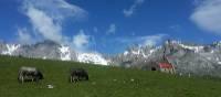 Picturesque countryside in the Picos de Europa
