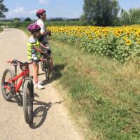 Man and child looking at sunflowers on a self guided cycle trip in Catalonia   Kate Baker