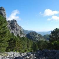 Walk through Pine forests in the Sierra de Grazalema