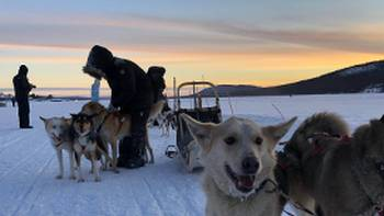 Dogsledding is one of the highlights of an Arctic adventure | Kate Baker