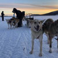 Dogsledding is one of the highlights of an Arctic adventure   Kate Baker