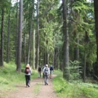 Hiking through Häringe-Hammersta nature reserve | Kathy Kostos