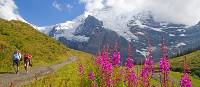 Hiking along the Alpine Pass Route | Andrew Bain