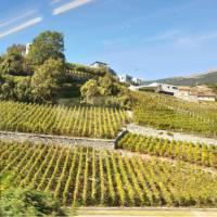 Vaud vineyards   Dana Garofani