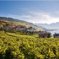 Rivaz, above Lake Geneva on the Via Francigena in Switzerland