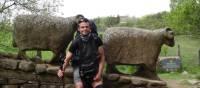 A rest by a sheep sculpture near the River Tees | John Millen