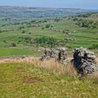 Yorkshire fields   John Millen
