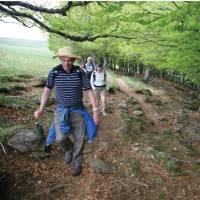 Beech trees near Aubrac