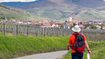 Hiking between the vineyards of Alsace   Charles Hawes