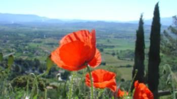 Poppies taking in the views around Gordes