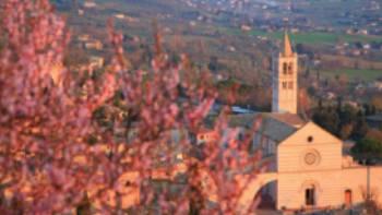 Assisi through the blossom