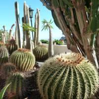 Prickly cactus garden in Hermigua