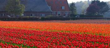 Cycle through the typical Dutch countryside in spring