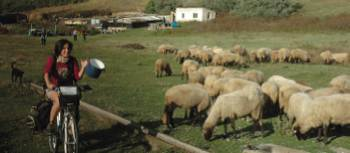 Visiting traditional sheepfold to sample their cheese, Romania | Sue Badyari
