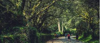 Walking along the Camino de Santiago trail in Galicia | @timcharody