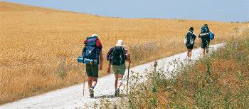 Pilgrims walking along the Camino in the Rioja region